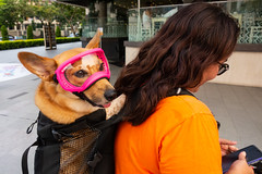 Goggs (David_____G) Tags: goggles streetphotography dog