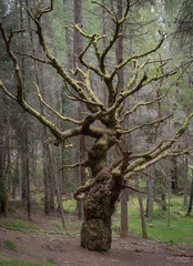 Old Timer (Mr Aylesbury) Tags: woodland countryside scotland tree highlands nature sonya7iii woods sony forest 2019 karlvaughan fe24240mmf3563oss