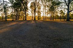 Pony club dog walk, early summer dusk. (Chris Reus-Smit) Tags: fuji x100 australia landscape dusk queensland trees