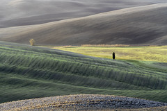 Colourful Tuscan Landscape with Light and Shades of Grey and Green - Tuscany Details 18 (John Hallam Images) Tags: colourful tuscan landscape light shades grey shadesofgrey tuscany details 18