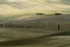 Rolling Tuscan Fields with Light and Shades of Grey - Tuscany Details 17 (John Hallam Images) Tags: rolling tuscan fields light shade grey shadesofgrey tuscany details 17