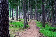 forest path (Krystian38) Tags: forest path mountains woodland outside outdoor green nature karpacz sudety poland polska pentax k50 travel trees landscape landscapes karkonosze karpatka