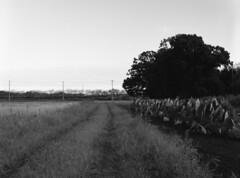 Path by eddoes field (odeleapple) Tags: zenza bronica etrsi zenzanon 75mm neopan100acros film monochrome analog bw eddoes field path
