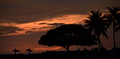 waikiki sundown (The world is my canvas) Tags: waikiki beach surfing surfers waikikibeach waikikibeachsunset honolulu honolulubeach sea hawahii hawahiisurfing longboard usa islandlife nikon d800e nikond800e afs nikkor 70200mm f28 70200 nikkorlens silhoette sunsetsilhoette girlandguysurfing nature trees