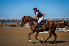 (Annabel Photographie) Tags: canon600d annabelphotographie plage vendee saintjeandemonts caval'oceane cheval chevaux jumping