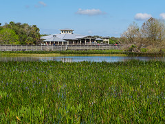 Green Cay (Joey Hinton) Tags: olympus omd em1 40150mm f28 green cay wetlands florida mft m43 microfourthirds bird