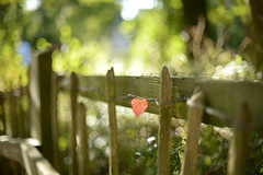 September Heart... (KissThePixel) Tags: autumn autumncolours autumnlight autumnbokeh red gold green fence fencephotography fencebokeh depthoffield dof dofalicious dreamy dedhamvale suffolk sunday september septembersun pov perspective bokeh bokehlicious beautiful autumnleaves leaves autumnleaf leaf redleaf woodenfence happyfencefriday fencefriday flickr flickrfriday nikon nikondf nikkorf12 f12 nikkor50mmf12 50mm