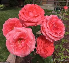 September 15, 2019 - Gorgeous Thornton flowers. (LE Worley)