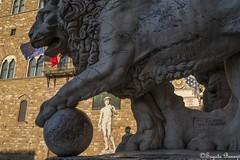Medici Lion and David (replica) (Joy Forever) Tags: florence italy europe sculpture statue renaissance medici lion david michelangelo replica