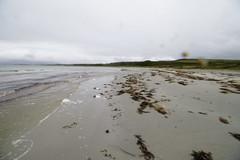 09 Sept 2019 Kilmory (10) (AJ Yakstrangler) Tags: yakstrangler kilmory knapdaleforest argyllandbute beach scotland