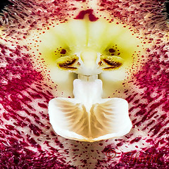190915 omd 190916 © Théthi ( 4 photos ) (thethi: pls read my first comment, tks) Tags: pareidolia macromondays fleur monstre humain tete oeil dent levre orchidee macro carre c4 funny pareidolie faves101