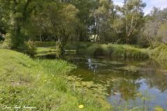 'Aloüarn' (jean-paul Falempin) Tags: nature moulin rusruisseaurivière reflets guengat finistère brittany