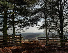 Open View (Martyn.A.Smith LRPS) Tags: bradgatepark leicestershire colour trees fence foliage fujifilm xt2