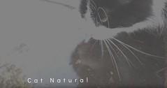 cat drinking water slo mo jazz (tobto) Tags: freejazz slo mo film free jazz video cat films noir music