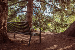 Under the Spruce (Susan.Johnston) Tags: bench happybenchmonday hbm spruce dorothyharviegardens calgaryzoo