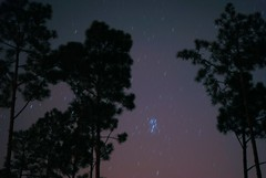 Pleiades in the Star Trails (Zoom Lens) Tags: pleiades stars startrails nightsky fog clouds beginningofsunrise longexposure pinetrees woods