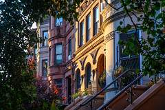 Prospect Heights (street level) Tags: brooklyn architecture nyc townhouses prospectheights latesun trees newyorkcity realestate stoop windows citylife gothamist nikon