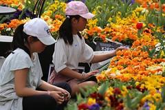 写生 - art excursion (Triple See) Tags: canon6d canon70300l canberra floriade flower colour spring
