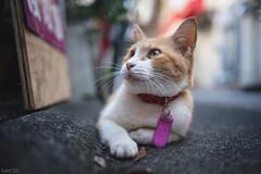 猫 (fumi*23) Tags: ilce7rm3 sony sel35f18f fe35mmf18 a7r3 animal alley cat chat katze gato emount 35mm bokeh ねこ 猫 ソニー
