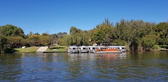 Boats on the Vaal River (Rckr88) Tags: vanderbijlpark southafrica south africa boats vaal river boatsonthevaalriver boat rivers water tree trees vaalriver