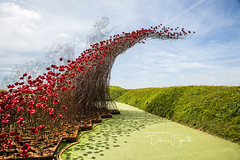 Over the top (debraflynnphotography) Tags: 2018 flowers fortnelson red artwork poppies rememberance