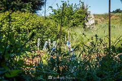 Envàs on vas (SantiMB.Photos) Tags: 2blog 2tumblr 2ig gallecs mollet vallèsoriental vallès primavera spring campos fields huerto vegetablegarden geo:lat=4155430762 geo:lon=220082362 geotagged molletdelvalles cataluna españa