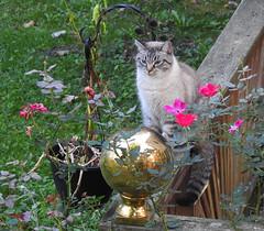 Madame Rose (annette.allor) Tags: cat garden fortune feline rose flower mirror gazingball fortuneteller