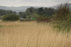 Tralee Wetlands , County Kerry Ireland (janpaulkelly) Tags: travels tralee kerry ireland wetlands nature biodiversity scenery outside spring mountains green grasslands trees