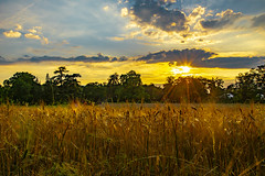 Summer days in the countryside (FVillalpando) Tags: sunset barley agriculture light summer sun trees landscape ngysa nature
