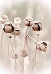 Existen 9 posibilidades de no entenderse. (Elena m.d.) Tags: macromondays nikon sigma sigma105 monocromo flowers