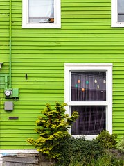 What's in the Window? (Karen_Chappell) Tags: green white window house home city urban downtown nfld newfoundland stjohns jellybeanrow wood wooden paint painted trim clapboard lines tree canada canonef24105mmf4lisusm avalonpeninsula eastcoast atlanticcanada architecture building color colour bright