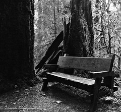 a place to relax (barragan1941) Tags: black white forest relax peacifull trees wood bench seat dream charmed magic abandoned forgotten