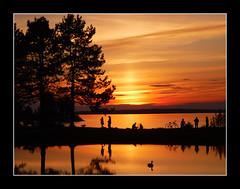 Sunset Dreaming (bigbrowneyez) Tags: sunset fabulous sky clouds cielo beautiful amazing frame silhett silhouette canadagoose andrewhaydenpark dof nature trees natura alberi acua fume ottawariver twilight striking stunning colourful nuvole special fantabulous