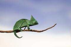 Chameleon (Daniel_Jllo) Tags: origami origamiart art paper papiroflexia paperfold animals camaleon chameleon origamichameleon