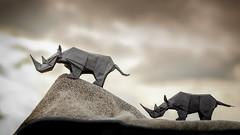 rhinos (Daniel_Jllo) Tags: origami origamiart art paper papiroflexia paperfold animals rhinos rhino rinoceronte origamirhino