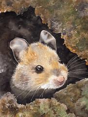 topolino (-valarian-) Tags: acquerello watercolour valarcolour animali topo
