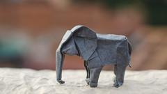 Elephant (Daniel_Jllo) Tags: origami origamiart art paper papiroflexia paperfold animals elephant origamielephant elefante elephantorigami