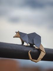 Opossum (Daniel_Jllo) Tags: origami origamiart art paper papiroflexia paperfold animals zariguella