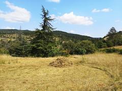 Cut field, Pebrieres (Niall Corbet) Tags: france occitanie languedoc aude scything scythe cut