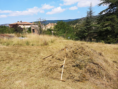 Cut field, Pebrieres (Niall Corbet) Tags: france occitanie languedoc aude pebrieres field scythe faux scything cut
