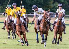 _D756950 (mcintyrephotographers) Tags: newforestpoloclub newforestpolo england ponies 18th august 2019 blue jackets tournament polo outdoors brockenhurst mallets gallop games chukkas