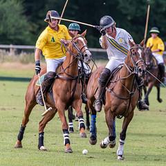 _D756947 (mcintyrephotographers) Tags: newforestpoloclub newforestpolo england ponies 18th august 2019 blue jackets tournament polo outdoors brockenhurst mallets gallop games chukkas