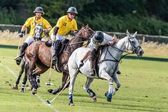 _D756920 (mcintyrephotographers) Tags: newforestpoloclub newforestpolo england ponies 18th august 2019 blue jackets tournament polo outdoors brockenhurst mallets gallop games chukkas
