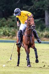 _D756879 (mcintyrephotographers) Tags: newforestpoloclub newforestpolo england ponies 18th august 2019 blue jackets tournament polo outdoors brockenhurst mallets gallop games chukkas