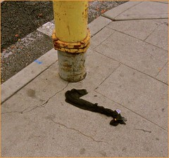 More Saddness ( ? ) (chrstphre) Tags: black snake shape stocking yellow sidewalk lost discarded