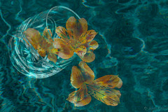 May I Pour You A Drink Dreamscape Series (Ann Kunz) Tags: composite water flowers abstract surreal