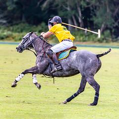 _D756934 (mcintyrephotographers) Tags: newforestpoloclub newforestpolo england ponies 18th august 2019 blue jackets tournament polo outdoors brockenhurst mallets gallop games chukkas
