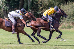 _D756886 (mcintyrephotographers) Tags: newforestpoloclub newforestpolo england ponies 18th august 2019 blue jackets tournament polo outdoors brockenhurst mallets gallop games chukkas
