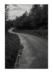 The long and winding road (K.Pihl) Tags: leicam5 spikes road monochrome trees woods kodaktrix400320 blackwhite pellicolaanalogica schwarzweiss bw film hc110e147 analog