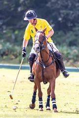 _D756953 (mcintyrephotographers) Tags: newforestpoloclub newforestpolo england ponies 18th august 2019 blue jackets tournament polo outdoors brockenhurst mallets gallop games chukkas